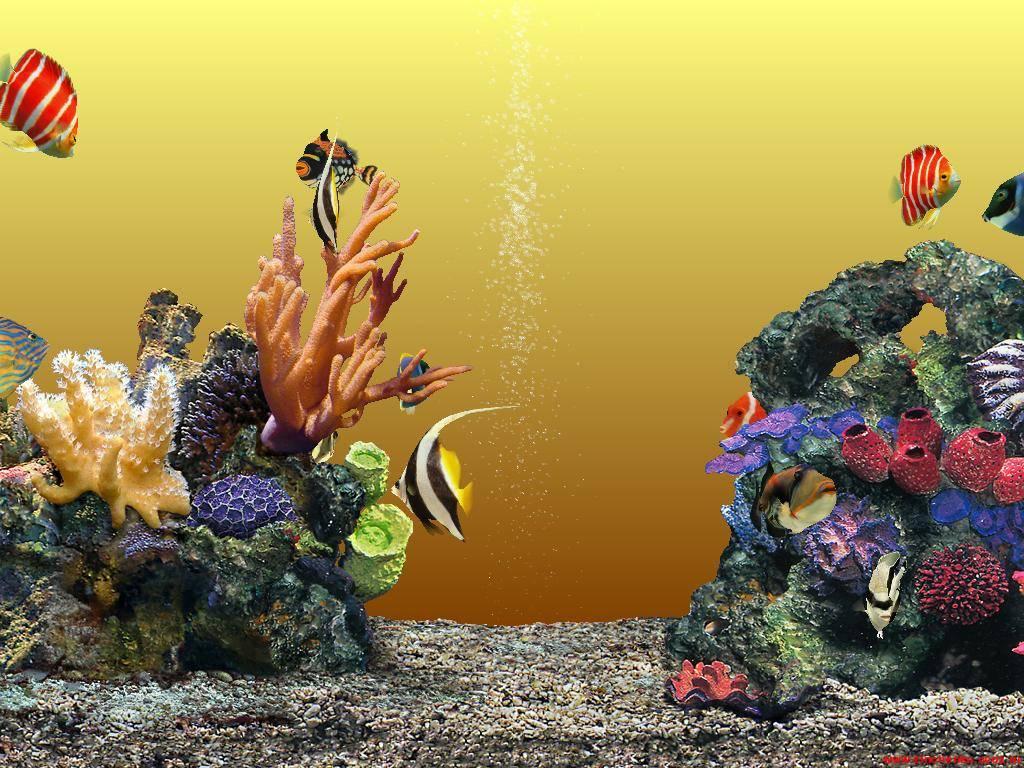 Картинки анимации рыбок на рабочий стол, для мамы своими